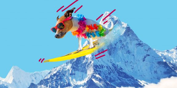 ТЕСТ: Экстремальная глажка или сёрфинг с собакой? Узнайте, в каком странном виде спорта вы бы преуспели!