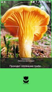 5 полезных приложений для грибника
