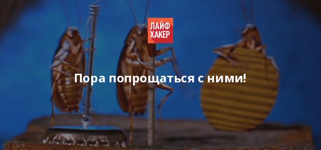 Тараканы насекомые как избавиться