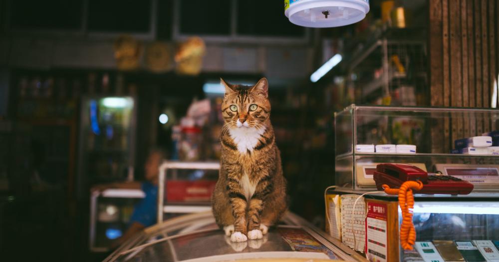 Сколько раз в день и чем кормить кота (кошку) в домашних условиях